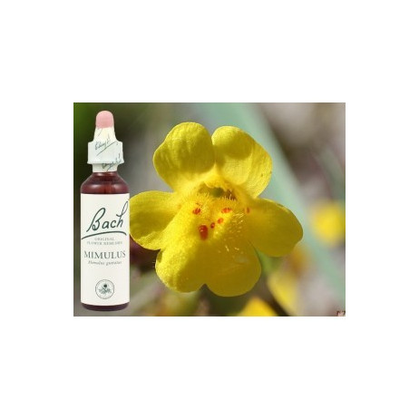 BACH Mimulus - Mimule 20ml