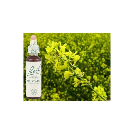 BACH Mustard - Moutarde 20ml