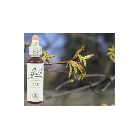 BACH Oak - Chêne 20ml
