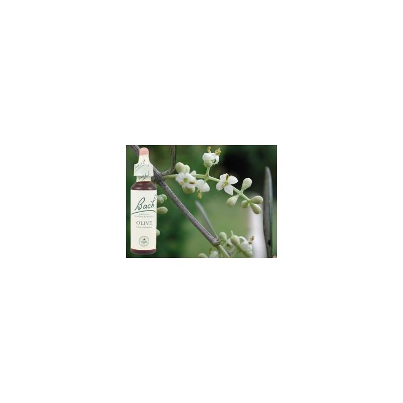 BACH Olive - Olivier 20ml